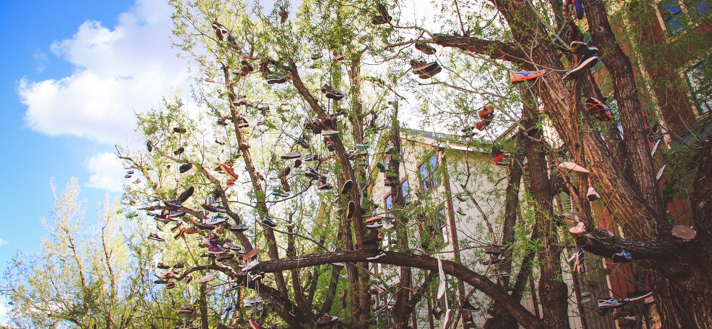 Park City Shoe Tree Header