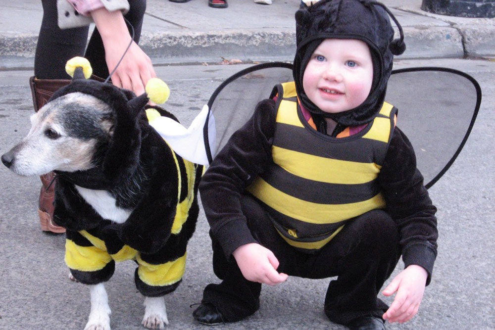 Child and Dog Dressed at Bumble Bees for Halloween