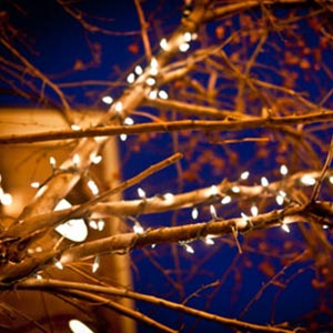 Twinkle Lights in the Tree