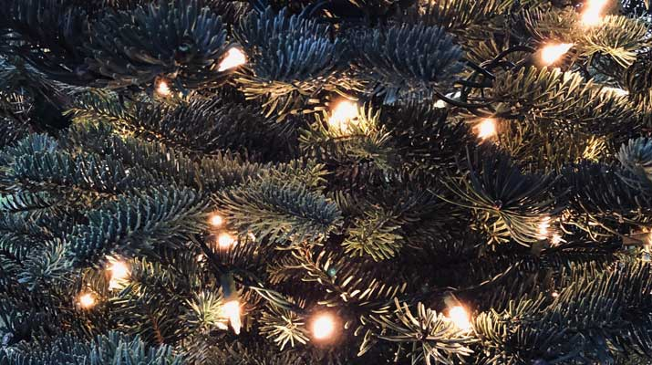 Close Up of Christmas Lights on a Tree
