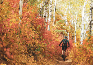Mountain Biker Peddling Up-Hill on Trail Surrounded by Orange and Yellow Aspens in Fall