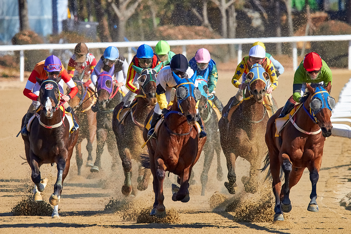 San Diego Del Mar Horse Racing