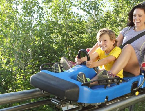 All About the Alpine Slide in Park City