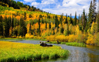 wildlife in park city: moose in lake surrounded by fall foliage