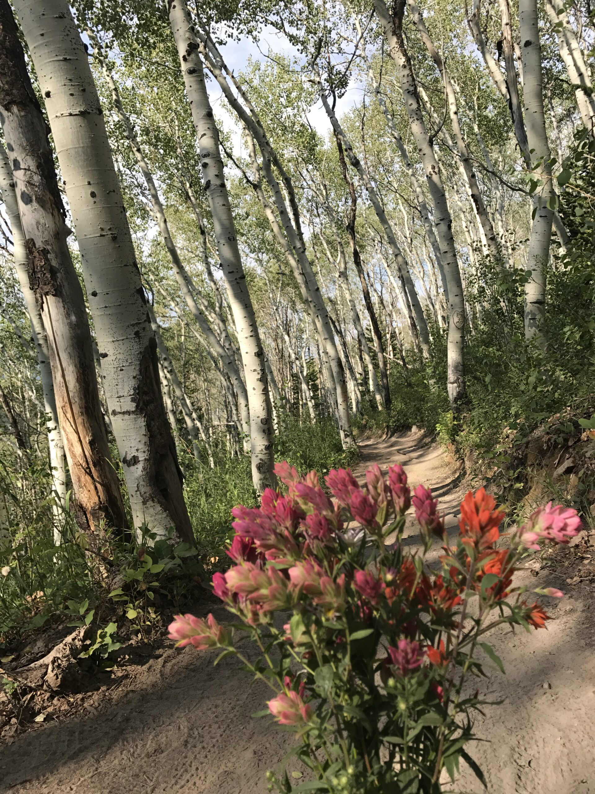 Bouquet of Wildflowers Picked on a Trail Surrounded by Aspen Trees in Park City Utah